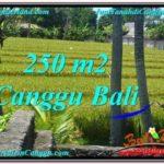 Exotic Canggu Pererenan BALI LAND FOR SALE TJCG207