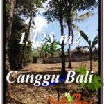 Affordable LAND IN Canggu Pererenan BALI FOR SALE TJCG208