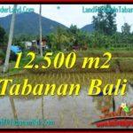Magnificent PROPERTY LAND IN Tabanan Penebel BALI FOR SALE TJTB317