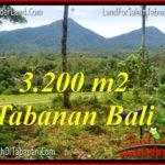 Beautiful 3,200 m2 LAND FOR SALE IN TABANAN BALI TJTB319