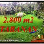 Magnificent PROPERTY LAND IN TABANAN BALI FOR SALE TJTB333